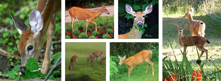 DeerGard Ultrasonic Deer Repellent only 5995 at Garden Fun